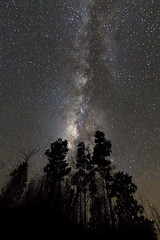 milky way and trees (Macbrian Mun) Tags: trees sky tree nature night way stars galaxy astrophotography astronomy universe milky starr nigh stargazing milkyway starrysky