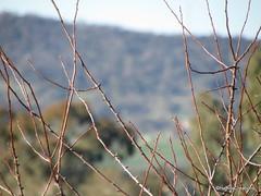 twigs (haffina) Tags: scenery twigs haffina