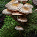 2nd Place - Altered/Composite - Al Perry - Mushrooms