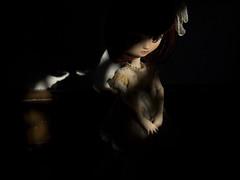 Poppy in shadows #02