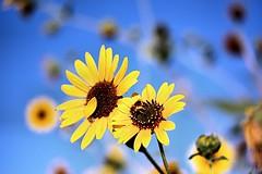 Flowers (Lauren P. Arfman) Tags: flowers gamewinner challengefactorywinner thechallengefactory