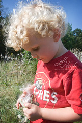 Milkweed is awesome stuff (grilljam) Tags: autumn milkweed ewan 4yrs commongroundfair september2013