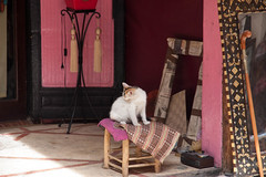 IMG_9356.jpg (tomaszd) Tags: cat geotagged mar market northafrica redclay adventure morocco clay souk bazaar magiclantern marrakesch 2013 marrakechtensiftalhaouz geo:lat=3163158113 geo:lon=798957647