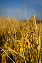 rice__fisher delta research center_0054