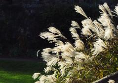 Grass (Caerphilly Keeper -AKA Nick) Tags: november st sunny wfc fagans photomeet 2013 welshflickrcymru