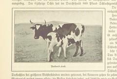 Image taken from page 307 of 'Nama und Damara. Deutsch Sud-West-Afrika' (The British Library) Tags: cow medium calf publicdomain vol0 date1896 bldigital pubplacemagdeburg page307 sysnum001308646 francoishugovon