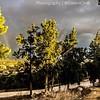 من ألبوم | غيوم سوداء و الأرض ذهبية. From Album | Black clouds & the earth Golden Photograph | @Saleh4One #Palestine #Jenin #Rommanah #فلسطين #جنين #رمانة  #WHP #whpliquidlandscape #WHPgoldenhour