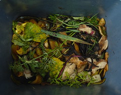 compost MED SDIM0971 (StefanSzczelkun) Tags: life food plant art composition time vegetable bin domestic cycle frame ritual chance organic waste diet process compost decomposition aging rectangle core mixture ending matter composing decomposing peelings youarewhatyoueat carrotleaves