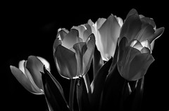 Earth Hour (ReidarMurken) Tags: bw white black flower monochrome nikon earth hour reidar murken earthhour d7000 nikonflickraward