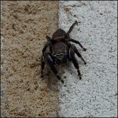 *** (dmitry_ryzhkov) Tags: life wild colour macro nature wall closeup photography spider photo village shot photos shots spiders sony documentary ukraine dmitry ryzhkov poltavaregion slta77 dmitryryzhkov lazirki dmitryryzhkovcom