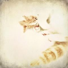Feline (Cathrine Halsor) Tags: cat feline mindfulness freespirit memoriesbook