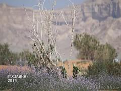sony a57 zoom 300 #Rose # #Bouquet #flower #flowers # # # # #Saudi #Bahrain #Oman #Qatar #Emirates #oman #Malaysia #dxb ## # # # # # #  #Spring #plant # #nature #video    # (photography AbdullahAlSaeed) Tags: flowers plant flower nature rose bahrain video spring zoom sony emirates malaysia saudi bouquet 300 oman qatar dxb   a57            instagram x3abrr
