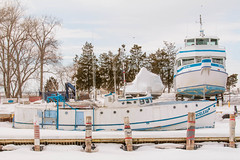 Great Blue Heron (Sharon Drummond) Tags: winter lake ontario canada ice water harbor boat lakeerie harbour greatlakes shore erie wheatley