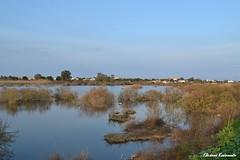 Spring time (Eleanna Kounoupa) Tags: blue sky lake water spring greece marsh artemis attica ελλάδα alikes λίμνη loutsa άνοιξη νερό γαλάζιο χόρτα αττική ουρανόσ άρτεμισ λούτσα αλυκέσ βάλτοσ έλοσ