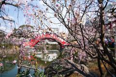 20140309_kameido-tenjin-shrine_029 (t.nanba) Tags: flower plum    dslra900 900 kameidotenjinshrine sal24f20z