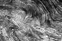 Wood Swirl XI (Joe Josephs: 3,166,284 views - thank you) Tags: wood newyorkcity blackandwhite centralpark photojournalism centralparknewyork blackandwhitephotography photographynikon copyrightjoejosephsphotography nikon1835f3545g copyrightjoejosephs2014