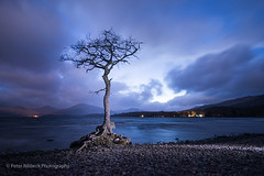 Milarrochy Tree 12.4.14 (Peter Ribbeck) Tags: tree lochlomond milarrochy peterribbeck2014nikkor1424mmnikond800portencross