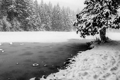In Snow and Ice (Tanya.Kirilova) Tags: durrancelake ice frozenlake snow flurry tree lake nikond7100 tokina1120mm cold winter outdoor canada britishcolumbia trees cloudy blackandwhite bw monochrome water waterscape white mono iced