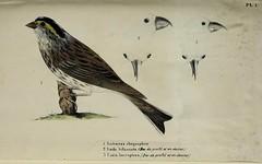 animals belgique belgium fauna zoologie zoology fieldmuseumofnaturalhistorylibrary bhl:page=52271919 dc:identifier=httpbiodiversitylibraryorgpage52271919