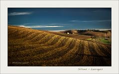 Sillons du Lauragais (hyver31) Tags: 2013 lauragais champscultivã©s coteaux hiver soir
