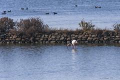 BIRDS (cune1) Tags: panorama landscape uccelli birds natura nature italia italy lazio salineditarquinia acqua water