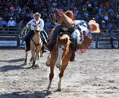P3110121 (David W. Burrows) Tags: cowboys cowgirls horses cattle bullriding saddlebronc cowboy boots ranch florida ranching children girls boys hats clown bullfighters bullfighting