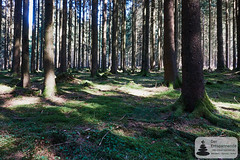 Bäume, Moos und Sonne: Nationalpark-Traumschleife Trauntal-Höhenweg