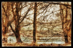 (yve_all) Tags: bäume trees see lake landschaft landscape licht light colours farben natur nature blickwinkel view