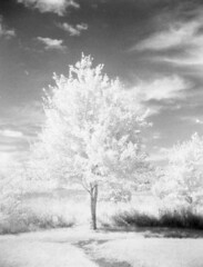 (bunnygrrrl3000) Tags: holgacfn120 ilfordsfx200 ilford sfx infrared infraredfilm blackandwhitefilm blackandwhite120