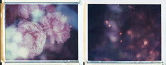 Navigating through the particles and waves (Joann Edmonds) Tags: polaroid roidweek polaroidweek land450 polaroid669 expiredfilm multipleexposures 669 abstract nature dreamscape floral flora lights sparkle diptych peonies specularhighlights