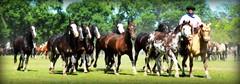 La overa y los picazos (Eduardo Amorim) Tags: gaúchos gaucho gauchos campeiro campeiros campero camperos cavalos caballos horses chevaux cavalli pferde caballo horse cheval cavallo pferd tropilhas tropilla tropillas crioulo criollo crioulos criollos cavalocrioulo cavaloscrioulos caballocriollo caballoscriollos sanantoniodeareco provinciadebuenosaires tropilha herd troupeau gregge herde iayayam yamaiay pampa pampaargentino pampaargentina argentina areco eduardoamorim