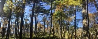 Otoño en Villarrica