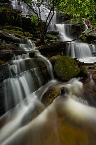 Wild Flow