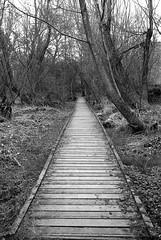 Board Way (Man with Red Eyes) Tags: delta100 ilford harman hc110 160 115mins v850 leicam2 summicron35mmf2 v4 iv analog blackwhite monochrome silverhalide a3minsb3mins sunnysixteen northumbria northumberland ingram riverbreamish