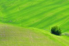 Green (luporosso) Tags: natura nature naturaleza naturalmente nikonitalia nikonclubit nikond500 verde green scorcio scorci country countryside minimal minimalismo minimalism colors colori