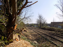 Chippings (Jason_Hood) Tags: disused abandoned railway railroad dudley dudleyport sedgley tree trees