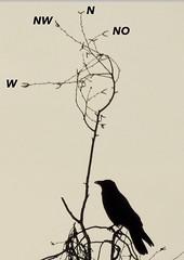 Richtungsweisend (Ulrich Ostermann) Tags: windrichtung windhose wind wegweiser