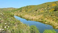 Ribeira do Vascão - Parque Natural do Vale do Guadiana // Guadiana Valley Natural Park (Valter Jacinto | Portugal) Tags: europe portugal algarve alentejo ribeira ribeiradovascão stream prnpppvaleguadiana paisagem landscape água water parquenaturaldovaledoguadiana guadianavalleynaturalpark geo:region=europe geo:country=portugal nikoncoolpixp900 p900