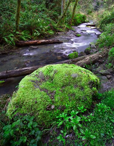 mendocino vandammestatepark ferns stream green moss