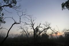 Fog at Dawn (blachswan) Tags: grampians grampiansnationalpark gariwerd gariwerdnationalpark nationalpark victoria australia fog dawn
