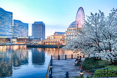 Beautiful Sakura Season (JIMI_lin) Tags: bluehour 藍調時刻 magichour magicmoment 日本 japan 東京 tokyo 橫濱 yokohama kanagawa 櫻木町 sakuragicho 馬車道 櫻花 sakura 橫濱摩天輪 ferriswheel