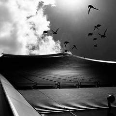 Look up !! (russellfenton) Tags: architecture london skybar blackandwhite bnw birds building