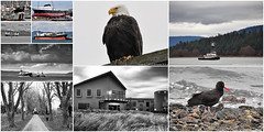 2017-03-31 Most Viewed of March 2017 (2048x1024) (-jon) Tags: anacortes fidalgoisland sanjuanislands skagitcounty skagit washingtonstate washington salishsea boat ship vessel tug tugboat eagle baldeagle blackwhite building night blackoystercatcher oystercatcher cemetery trees collage collection mostviewed march 2017 a266122photographyproduction