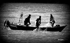 Pescaria... (verridário) Tags: black negro preto nero noir branco white blanc agua water rio river pesca fishing sony mono monochrome bw mondego people pescadores boat barco