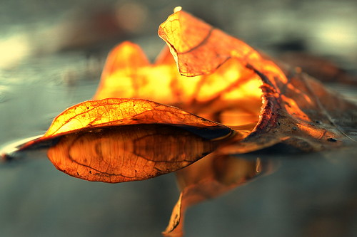 spring thaw (joy.jordan) Tags: leaf puddle reflection texture light bokeh nature beautyinthemuck sunset