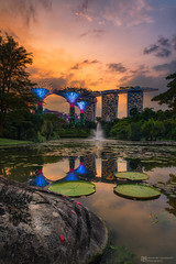sunset by the bay (Alexander Lauterbach Photography) Tags: singapore singapur asia marinabay marinabaysands gardens gardensbythebay water sunset reflection cityscape nature hotel sony a7r a7rm2