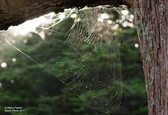Web of Intrigue (Spark-Photo) Tags: air hamilton spider balloon waikato web hot