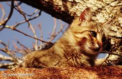 Lucy on the roof (gjaviergutierrezb) Tags: cat cats animals