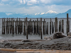 Point Roberts, WA (Neil M Photography) Tags: cormorants washinton usa point roberts birds ocean mountains pier landscape photography d810 85mm 18g logs driftwood hyperfocal beach shore water