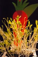 Kresse, nach der Saat (FrauN.ausD.) Tags: saat seed macro kresse cress grün green schwarz black orange food lebensmittel nikon